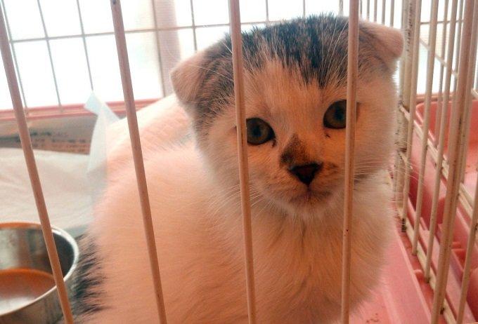 子猫・子犬を冷凍庫に放置殺害、生きたまま焼却炉に投げ入れ…! 繁殖業者の残酷すぎる処分方法を潜入調査団体が暴露インタビュー!の画像1