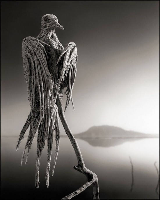 Lake-Natron-550x688.jpg