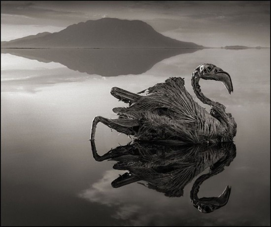 Lake-Natron2-550x460.jpg