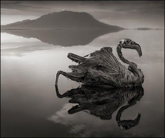 Lake-Natron2-550x460.jpg