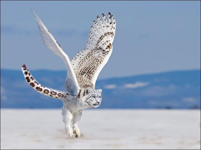 Nphotoshopped-animal-hybrids-1