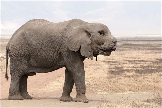 Nphotoshopped-animal-hybrids-3