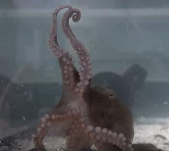OctopusGenome_2.jpg