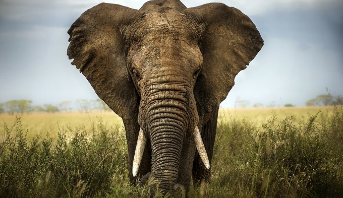 日本も大いに関係している!  22頭の死骸と象牙35本、相次ぐゾウの毒殺=ジンバブエの画像1