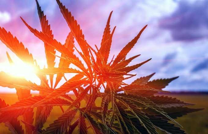 海外で大麻を吸った日本人の「見せしめ逮捕」がもうすぐ始まるぞ! 医療用大麻処方でも刑務所行き!の画像1