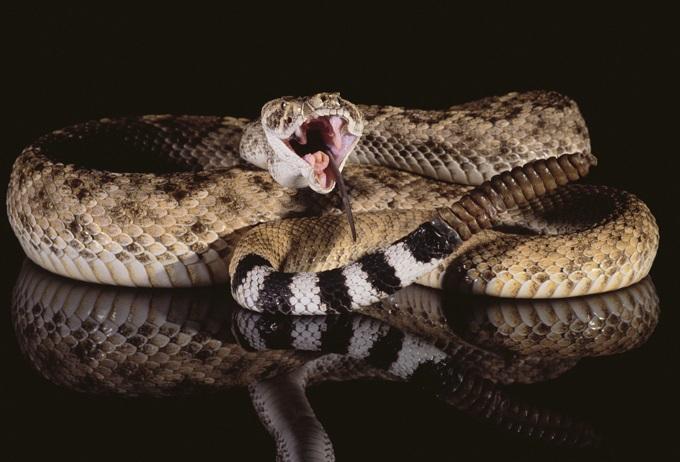 毒蛇に噛まれ、死ぬまでを記録した科学者 ― 最期の記述「午後1時30分…」の画像1