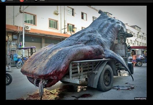 WhaleShark_2.jpg