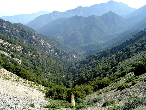 angelesnationalforest1.JPG