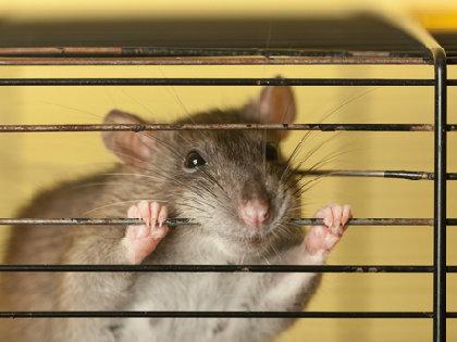 もだえ苦しむ実験動物たち~日本でも苦痛を軽減するシステムの確立を!の画像1