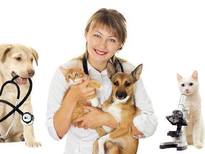 ペットに「再生医療」「がん免疫細胞治療」! イヌとネコの寿命が大幅に延長の画像1