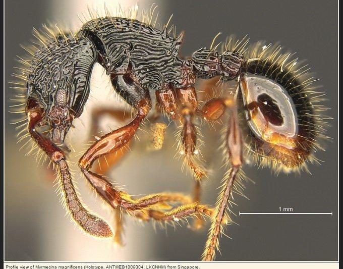 ant_02.jpg