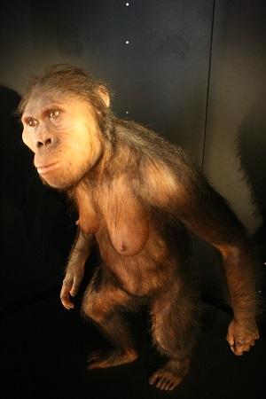 australopithecines1.JPG