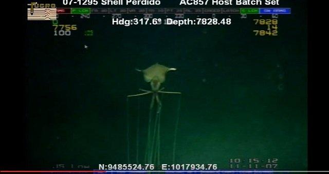 【衝撃動画】「エイリアン生命体」深海で発見される! 巨大な頭部、釣りあがった目…謎すぎる姿の画像1