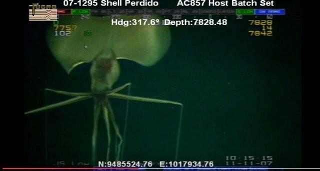 【衝撃動画】「エイリアン生命体」深海で発見される! 巨大な頭部、釣りあがった目…謎すぎる姿の画像2