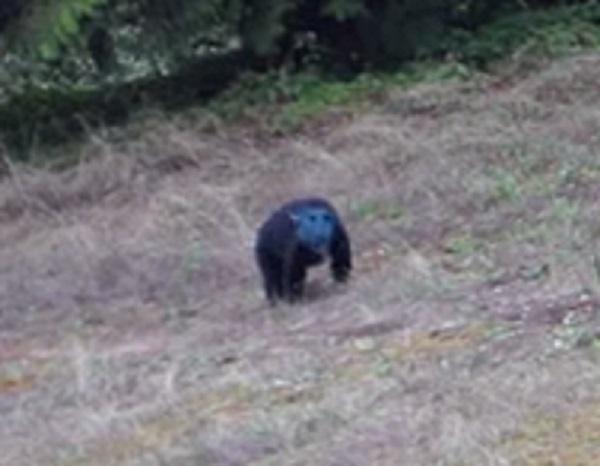 blue bear2.jpg