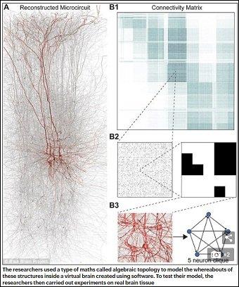 【ガチ】脳は11次元構造を持つ多元宇宙だった! 高次元ニューロンの動きに科学者「誰も想像していなかった世界」 の画像2