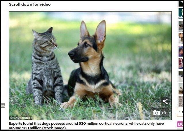 「犬と猫、賢いのはどっち」圧倒的な差で問題に終止符! 米大学の研究で判明された衝撃内容とは?の画像1