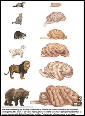 「犬と猫、賢いのはどっち」圧倒的な差で問題に終止符! 米大学の研究で判明された衝撃内容とは?の画像2