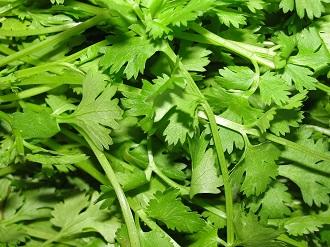 coriander1.JPG