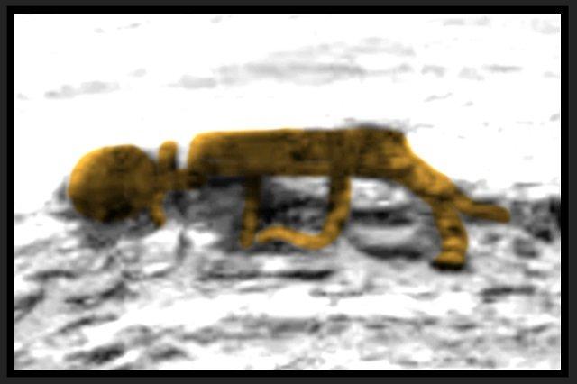 火星に「エイリアンの死体」が放置されていた! NASA公式画像で判明、「火星に生命が存在した動かぬ証拠」研究者の画像2