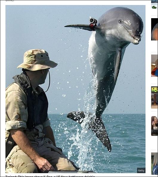 dolphin_2.jpg