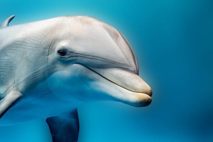 dolphins_1.jpg