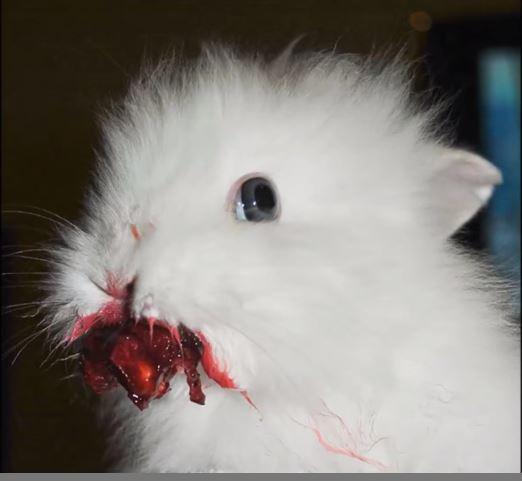eatingberries1.JPG