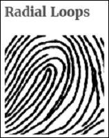 手相より当たる「指紋診断占い」がヤバすぎる! 14パターンで性格露呈、自己中で怒りっぽいタイプもの画像4