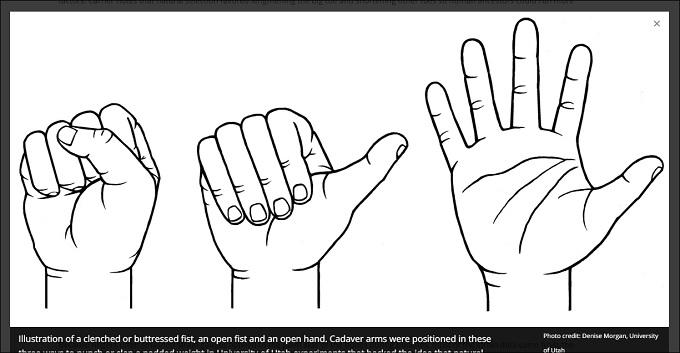 fist_3.jpg