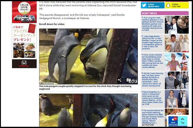 ゲイペンギンのカップルが育児放棄された子ペンギンを保護! あまりの生産性に飼育員も感動、2人の優しさについて語る!の画像2