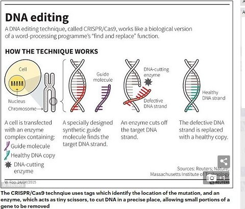 geneediting1.JPG