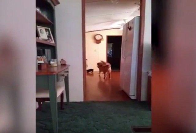 ghostdog_01.jpg