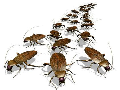 家から「ゴキブリ」を完璧に追い出す! 自然に優しい「ゴキブリゼロ」方法とは?の画像1