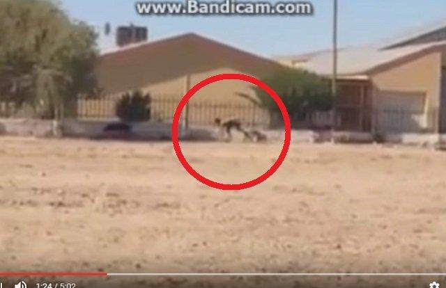 【衝撃動画】半分が犬、半分が人間のバケモノが激撮される! 全裸で爆走、獣姦による交配種か!?の画像1
