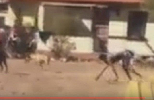【衝撃動画】半分が犬、半分が人間のバケモノが激撮される! 全裸で爆走、獣姦による交配種か!?の画像3
