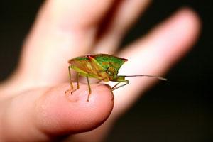 女王様から地味に嫌われる「虫フェチ」たち ― 30代男の身に起きた特殊な災難とは?の画像1