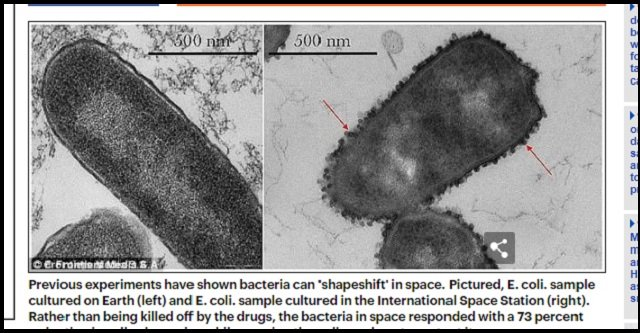 【歴史的発見】未知の生命が国際宇宙ステーションで採取される! ついに人類とエイリアンが邂逅、露宇宙飛行士が緊急発表 の画像3