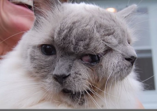 januscats1.JPG