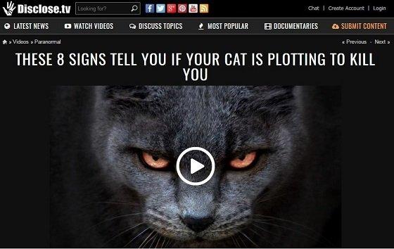 killercat1.JPG