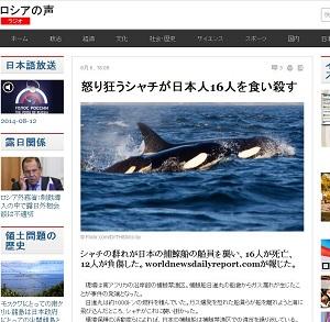 killerwhales1.JPG