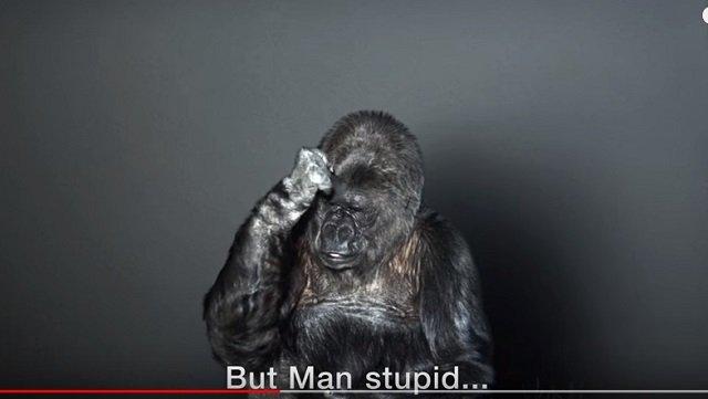 【感動】ゴリラのココが手話で人間に伝えた12のメッセージに心が震える! 「地球を助けて…」「死後の世界は…」の画像3