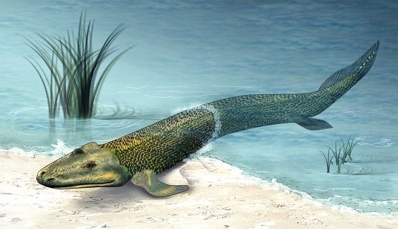 lobefinnedfish1.JPG