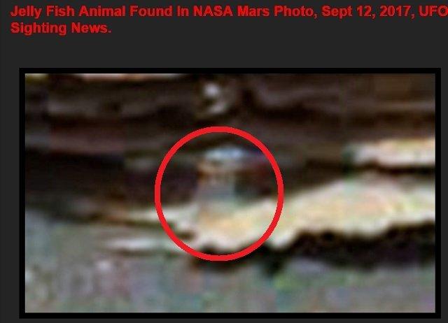火星で完璧すぎる「半透明火星クラゲ」が激写される! 世界的UFO研究家ウェアリング氏の復帰第一号!の画像4