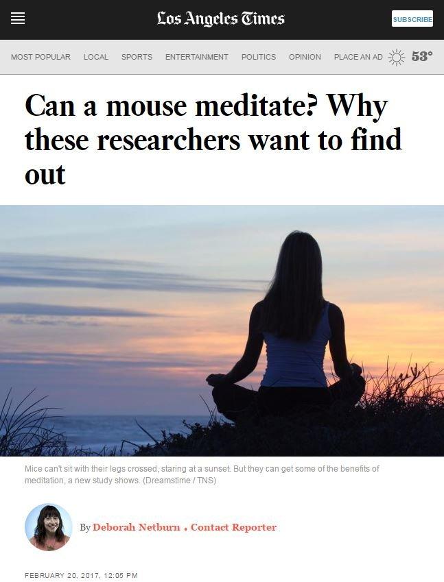 meditatingmice1.JPG