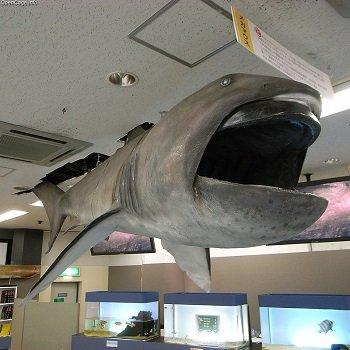 「メガマウス出現と地震発生は無関係」NHK報道に疑問! 過去データで完全反証、深海ザメの予知能力をナメるな!の画像1