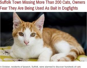 missingcats1.JPG