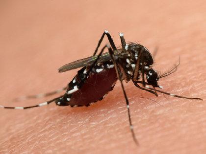 蚊に刺されやすいのは「中間所得層」だった! 世帯収入の差との因果関係は?の画像1