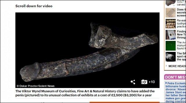 18世紀に処刑された男の「死後勃起ミイラペニス(18cm)」が放つ圧倒的生命力を見よ! 黒光りする巨根に有名ゲイ作家も熱狂!の画像3