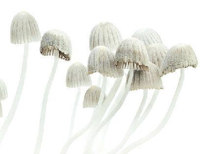 mushroom0127.jpg