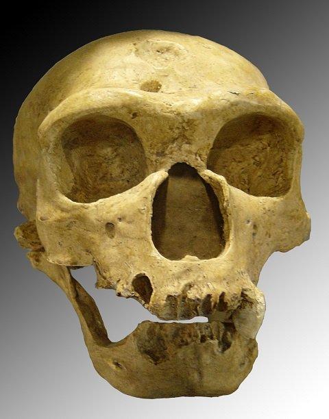 neanderthalbaby1.JPG